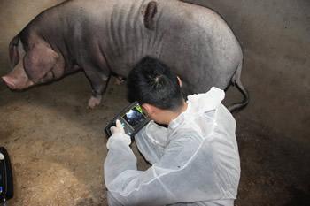 兽用B超机,宠物B超机,兽用b超,兽用孕检B超,猪用B超,猪用B超机