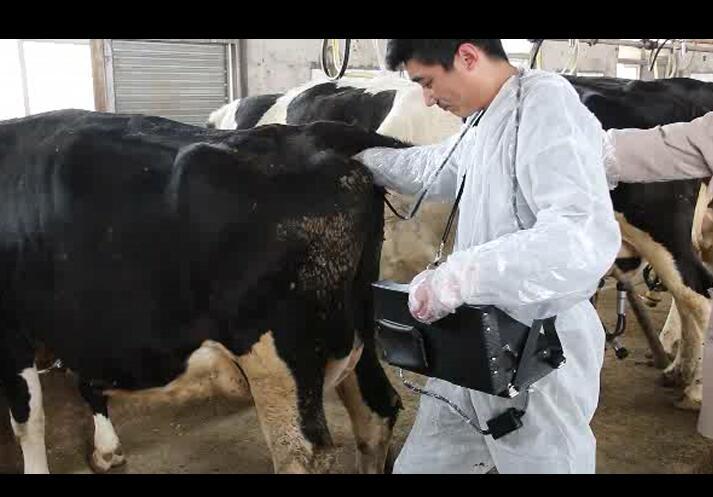 牛用B超机,B超机,牛用B超,养牛场用B超机,牛用B超机在养牛场的应用