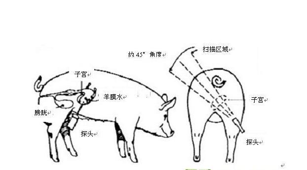 便携式猪用B超,便携猪用B超,便携猪用B超机,猪用B超机特点,猪用B超机用途