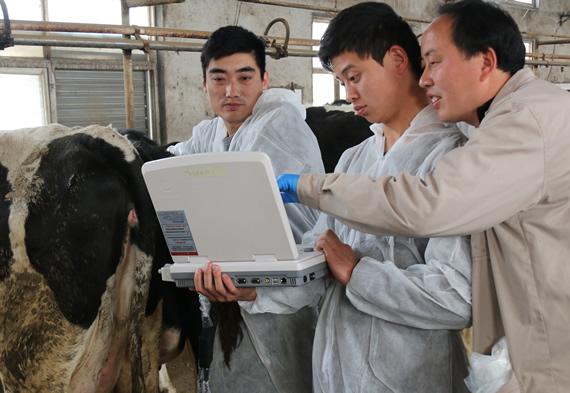 牛用B超,牛用B超机,牛孕检B超,牛场用B超机,养牛用B超机,兽用B超,兽用B超机